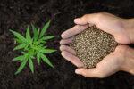 Vancoast Seeds USA